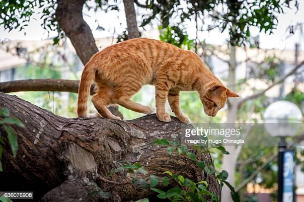 Kennedy Park Cat