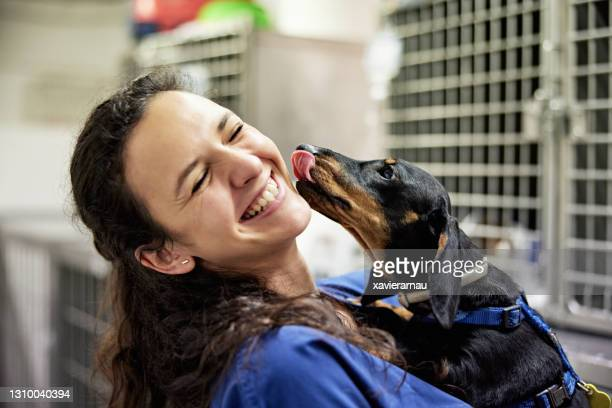 kennel assistant caring for dachshund at animal hospital - hound stock pictures, royalty-free photos & images