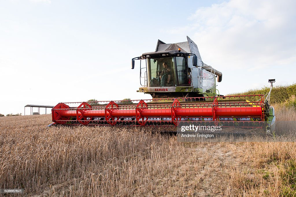 UK, Kent, combine harvester at work, at sunset, in field of wheat, using latest computerised technology and GPS, to establish and improve yield per acre.