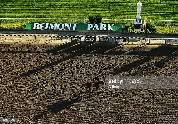 Kentucky Derby and Preakness winner California Chrome with exercise rider Willie Delgado up trains on the main track at Belmont Park on June 6 2014...