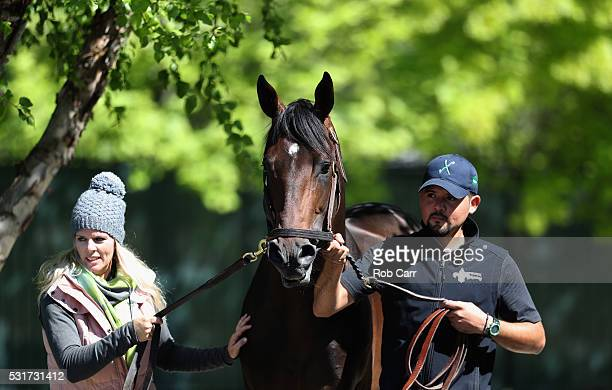 Kentucky Derby runnerup Exaggerator is lead back to the barn after schooling in the paddock for the Preakness Stakes at Pimlico Race Course on May 16...