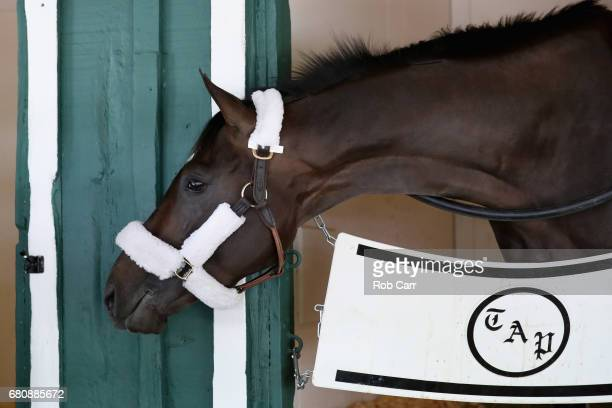 Kentucky Derby winner Always Dreaming looks out from his stall after arriving at Pimlico Race Course for the upcoming Preakness Stakes on May 9 2017...