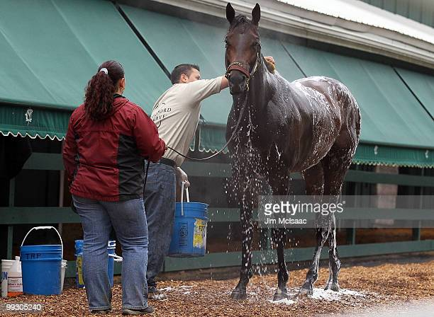 Kentucky Derby winner and Preakness Stakes hopeful Super Saver is bathed by Noe Antonio with help from Isobel Escobar after his morning workout on...