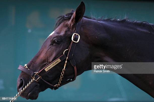 Kentucky Derby winning horse Always Dreaming is bathed following a training session for the upcoming Preakness Stakes at Pimlico Race Course on May...