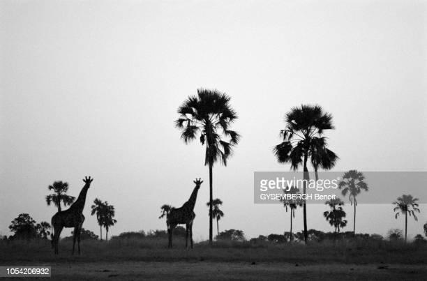 Kenya, Afrique, 1989 --- Pendant six mois, le photographe Benoît Gysembergh a traqué à travers continents et océans la ligne imaginaire qui partage...