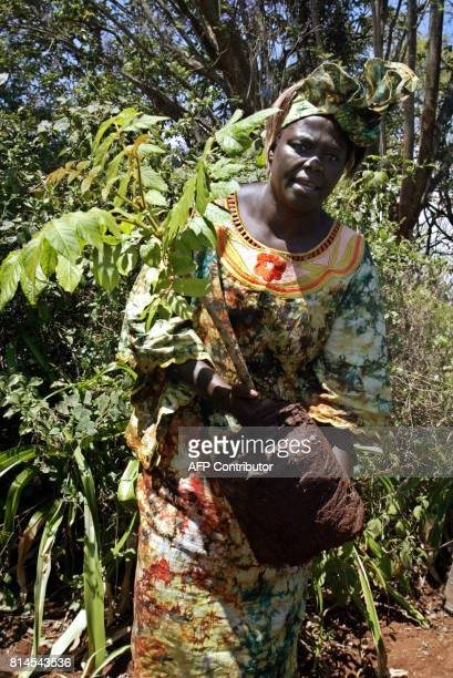 Kenya Assisant Minister for Environment and 2004 Nobel Peace Prize winner Wangari Maathai plants a Nandi Flame Tree 08 October 2004 in Nyeri 160 mk...