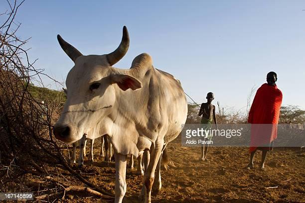 Kenya, Kalama Conservancy, Samburu tribe
