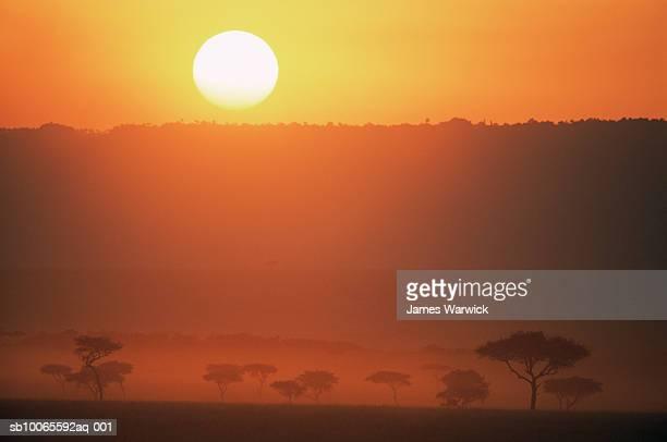 kenya, masai mara national reserve, oloololo escarpment desert date tree (balanites aegyptiaca) at dusk - escarpment stock pictures, royalty-free photos & images