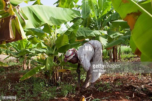 kenya, meru, farmer esther kaumbuthu - meru filme stock-fotos und bilder