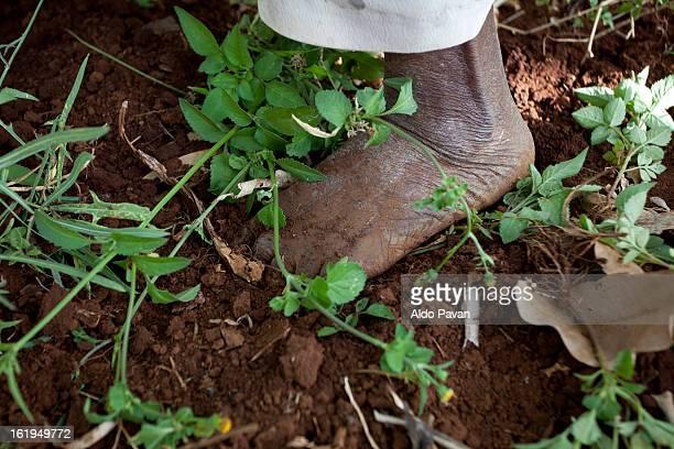 kenya, meru, foot of a farmer - meru filme stock-fotos und bilder