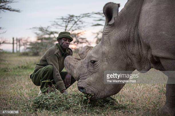 CONSERVANCY Kenya Mohammed Doyo head caretaker feeds Sudan The last male northern white rhino left on the planet Sudan lives alone in a 10acre...