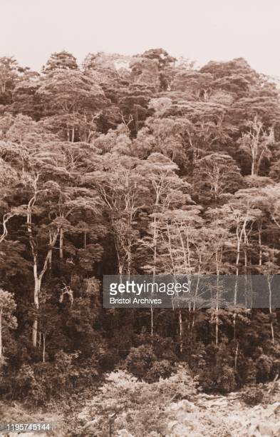 Kenya, View of an indigenous forest on a riverbank, viewed from the Meru to Embu road, Eastern Kenya, 1934. 1995/076/1/1/7/11.