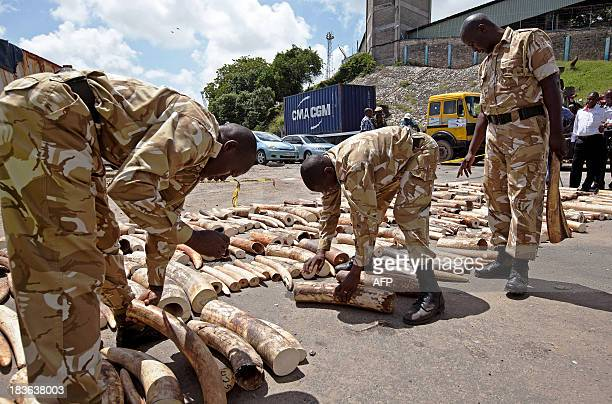 Kenya Wildlife Service Rangers inspect and number a confiscated ivory consignment at the Mombasa Port on October 8 2013 The Kenya Ports Authority...