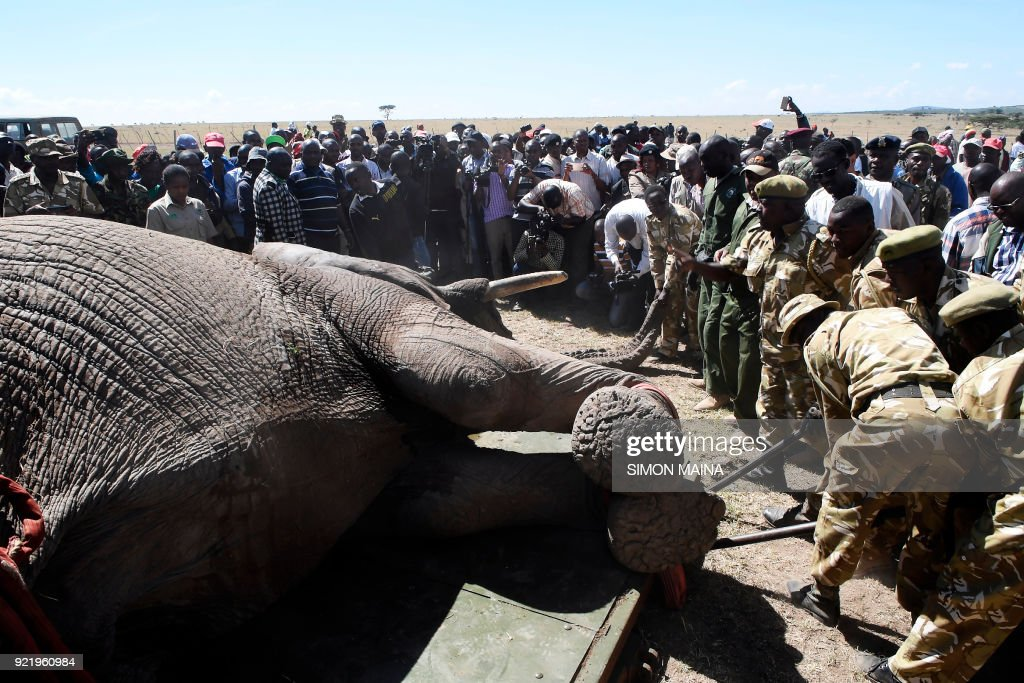 KENYA-ELEPHANT-TRANSFER-ANIMAL-ENVIRONMENT : News Photo