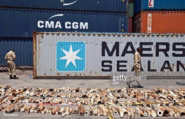 Kenya Wildlife Service Rangers walk past a confiscated ivory consignment at the Mombasa Port on October 8 2013 The Kenya Ports Authority intercepted...