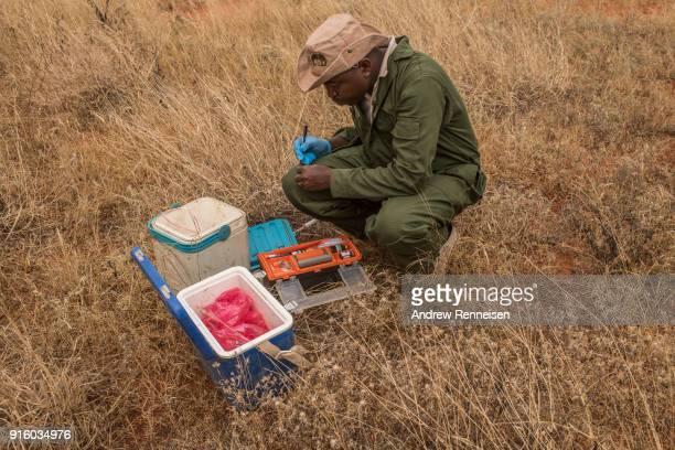 Kenya Wildlife Service veterinarian labels bloods samples during an elephant collaring operation on February 3 2018 in Tsavo East National Park Kenya...