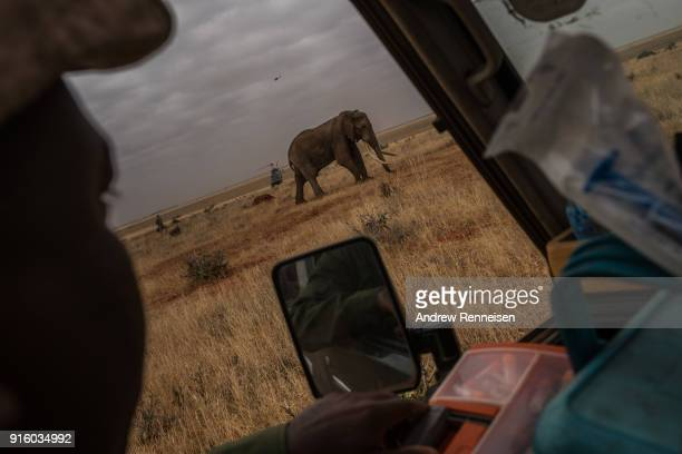 Kenya Wildlife Service veterinarian watches Wide Satao a male African Savannah Elephant during an elephant collaring operation on February 3 2018 in...