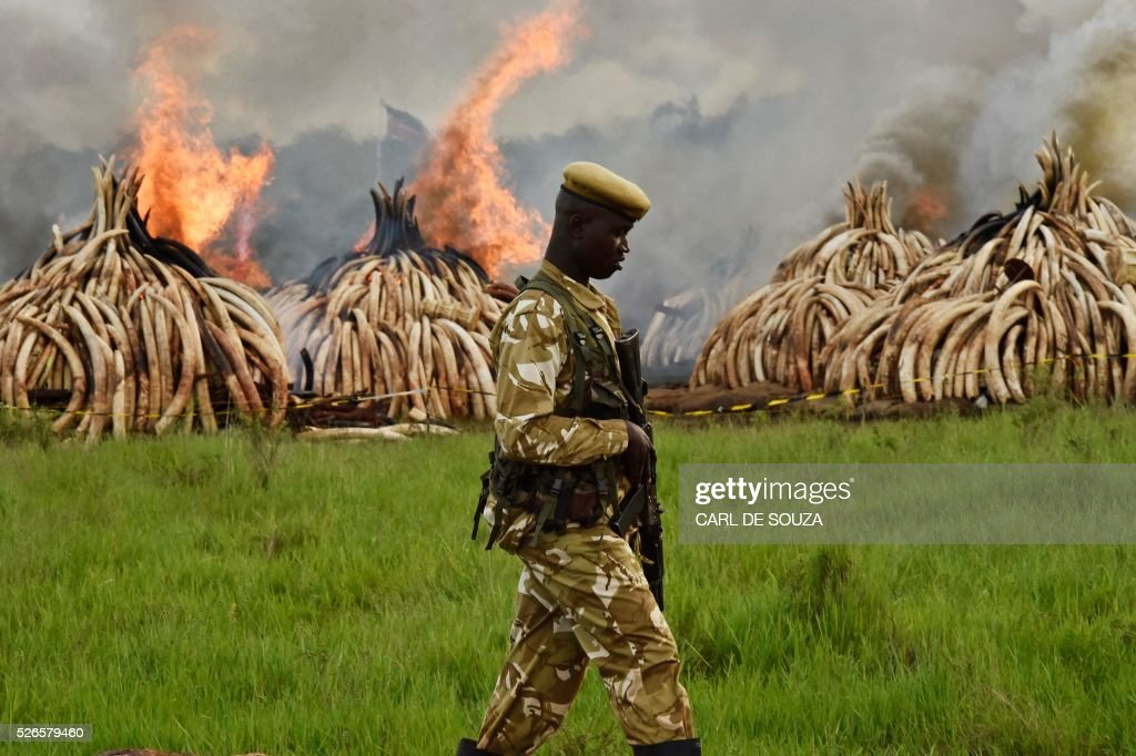 KENYA-IVORY-WILDLIFE-FIRE : News Photo