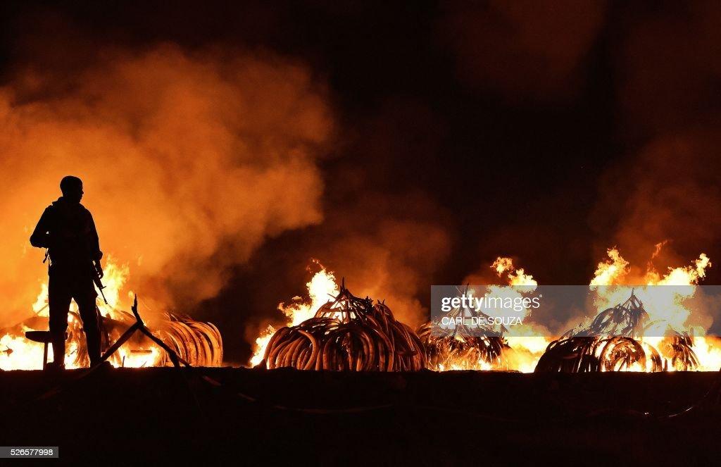 TOPSHOT-KENYA-IVORY-WILDLIFE-FIRE : News Photo