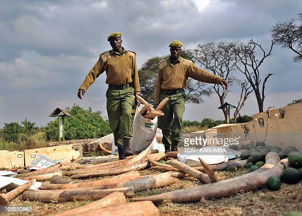 Kenya Wildlife Services rangers carry elephant tusks on August 23 that were part of an ivory haul seized overnight as it transited through Jomo...