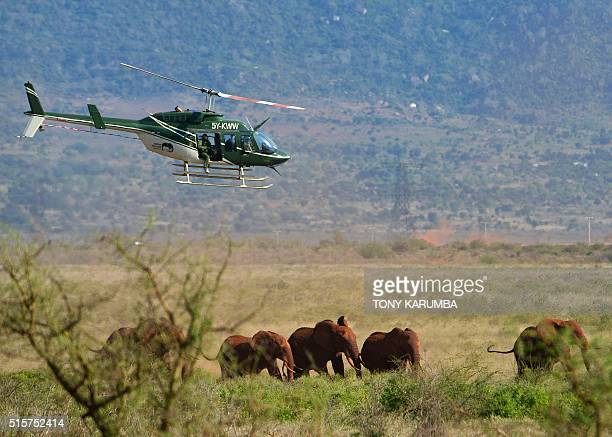 A Kenya Wildlife Services veterinary prepares to dart an elephant from a helicopter to set him a newly fitted collar recovers on March 15 2016 at the...