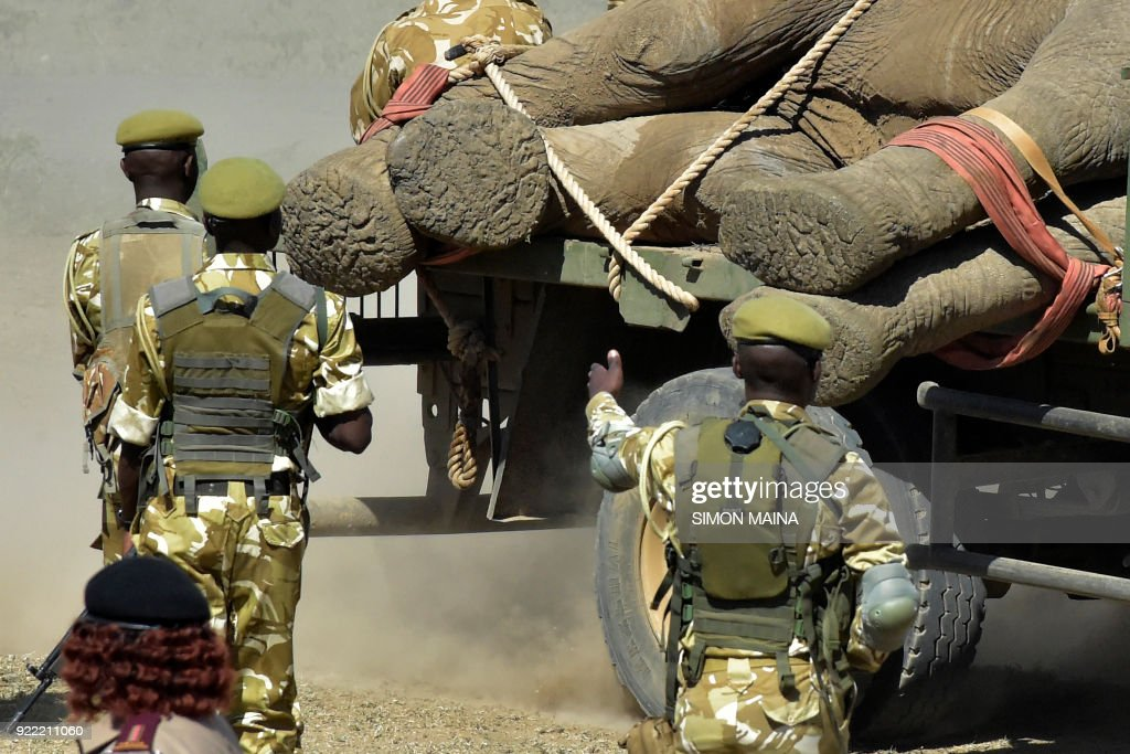 Kenyan Wildlife Service Rangers supervise tranquilised elephants on trucks at Lamuria on Nyeri county on February 21, 2018, during the translocation of elephants from Solio, Sangare and Lewa to the northern part of Tsavo East National Park in Ithumba. /