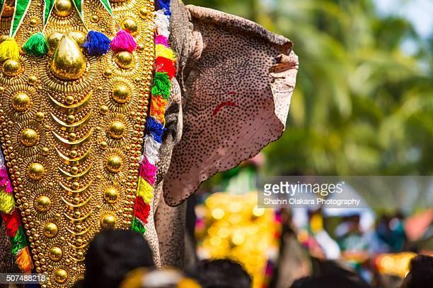 kerala festival - kerala elephants stock pictures, royalty-free photos & images
