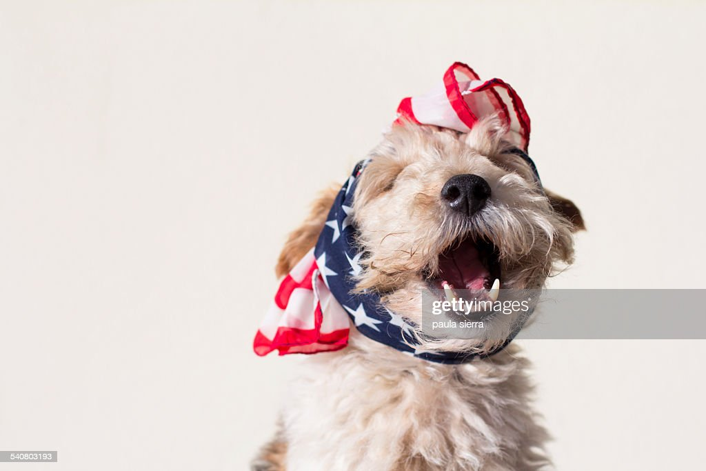 USA kerchief : Stock Photo