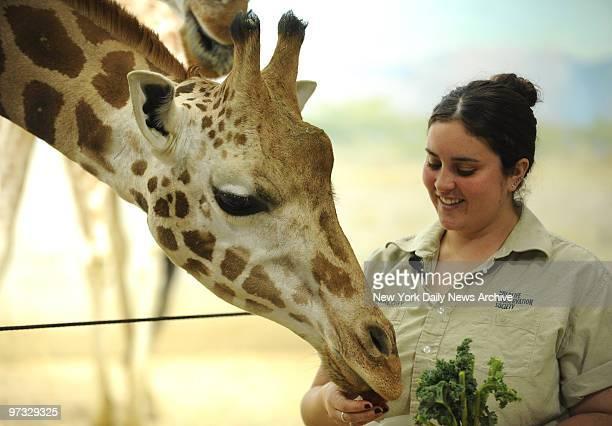 Keri Nugent Wild Animal Keeper giving treats at the Giraffe Exhibit at the Bronx Zoo