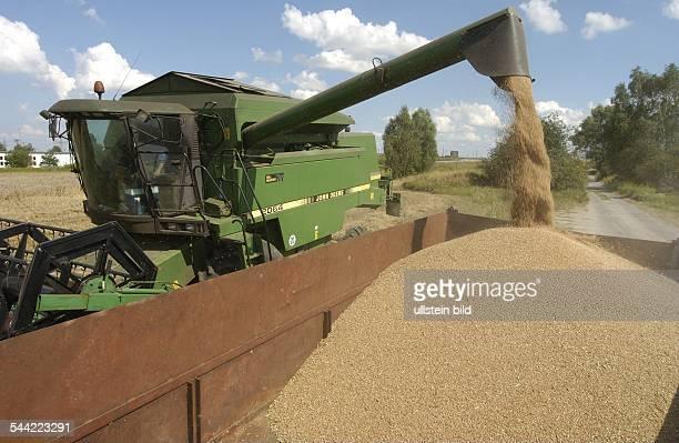 Kerkow DEU ein Maehdrescher bei der Ernte von Weizen auf den Feldern von GutKerkow entleeren des Kornspeichers