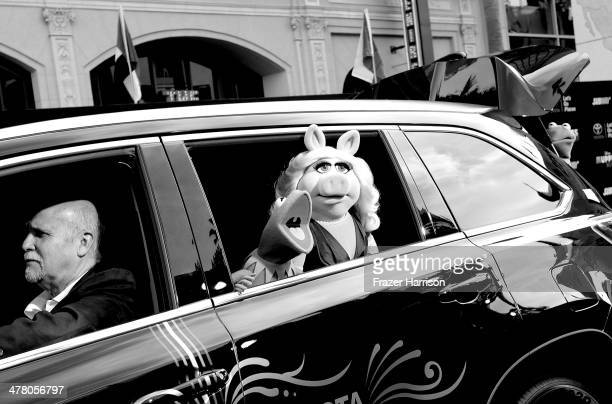 Kermit and Miss Piggy Kermit and Miss Piggy arrive at the premiere Of Disney's Muppets Most Wanted at the El Capitan Theatre on March 11 2014 in...