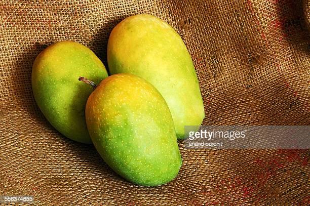 Kesar Mango, fruit, Gujarat, India