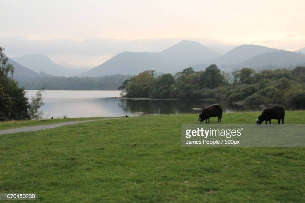 keswick-2014b.jpg - james popple stock pictures, royalty-free photos & images