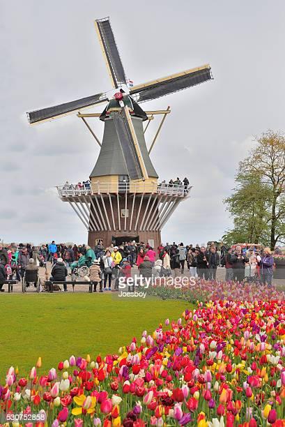 keukenhof moulin à vent attraction touristique - jardins de keukenhof photos et images de collection