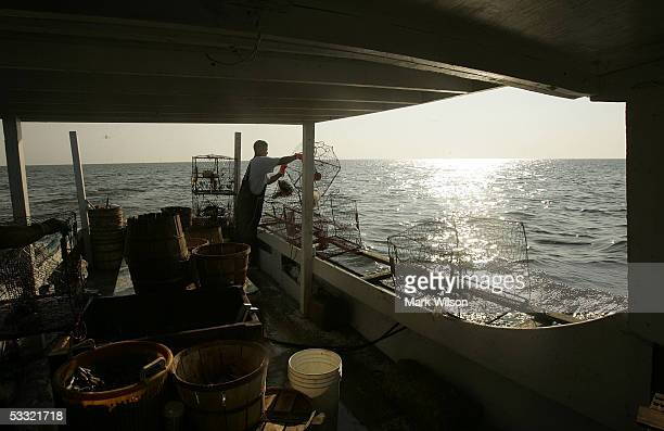 Kevin Doane aboard the commercial crabbing boat Foxy Roxy drops a crab pot over the side while crabbing on the Chesapeake Bay August 3 2005 in...