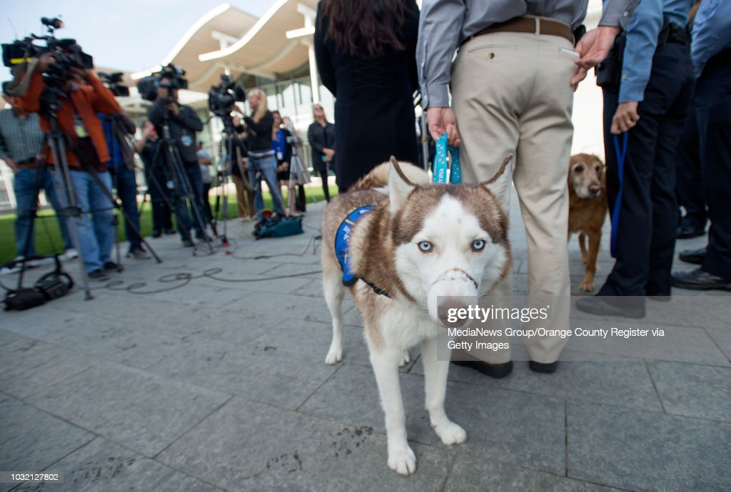 Kevin Marlin, Program Director of the Orange County SPCA