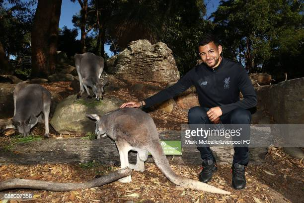 Kevin Stewart interacts with a kangaroo during a Liverpool FC player visit to Taronga Zoo on May 25 2017 in Sydney Australia