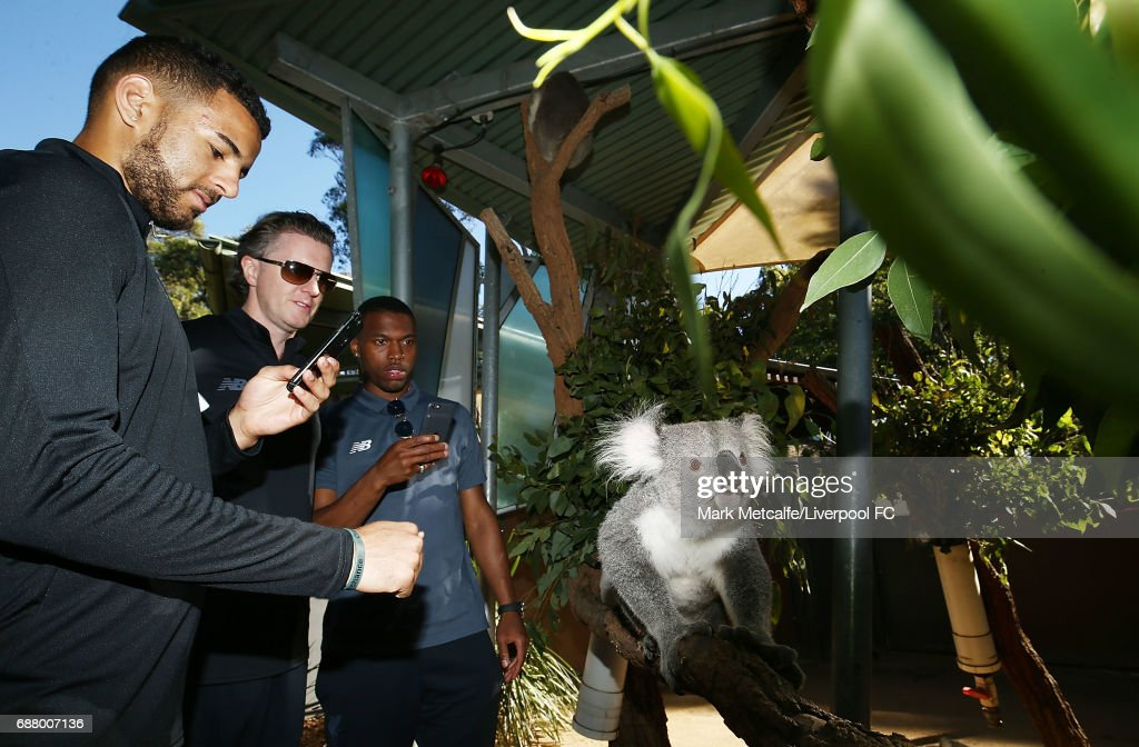 Kevin Stewart, Steve McManaman and Daniel Sturridge view a koala during a Liverpool FC player visit to Taronga Zoo on May 25, 2017 in Sydney, Australia.