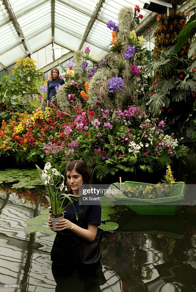 Kew Launch Their Tropical Extravaganza Festival : News Photo