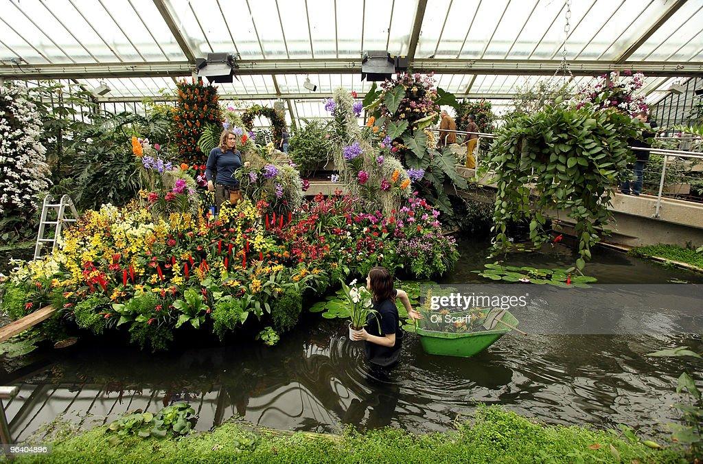 Kew Launch Their Tropical Extravaganza Festival : News Photo