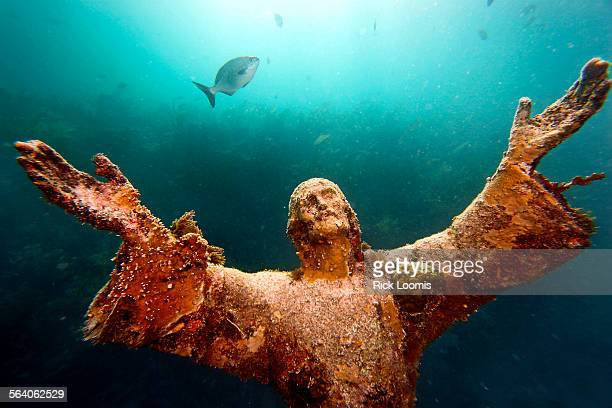 Key Largo Fl – Weeks after scrubbed off by Hurricane Wilma last October a garden of different algae and seaweed begin to grow on Christ of the Abyss...