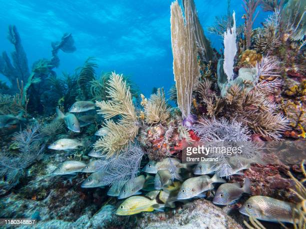 key largo underwater reefscape - the florida keys stock pictures, royalty-free photos & images
