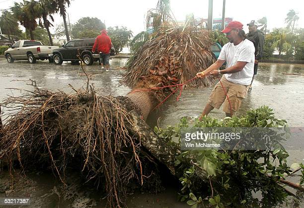 Key West resident Tim Kelly attaches a line to a fallen palm tree blocking the road in order to remove it after high winds and heavy rains generated...
