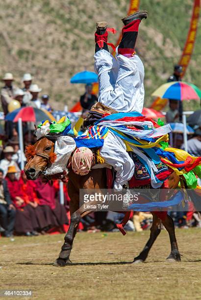 Khampa horseman demonstrates his acrobatic skills doing head stands and leaning backward to touch the ground from the back of a galloping horse at...