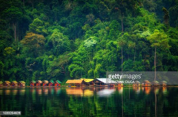 khao sok national park - surat thani province stock pictures, royalty-free photos & images