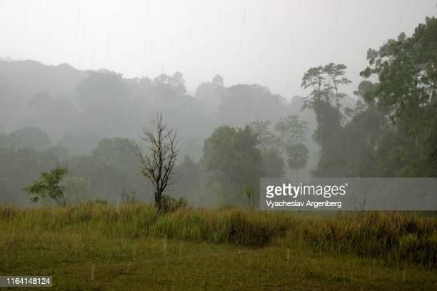 khao yai grasslands under the rain, tropical monsoon, thailand - argenberg stock-fotos und bilder