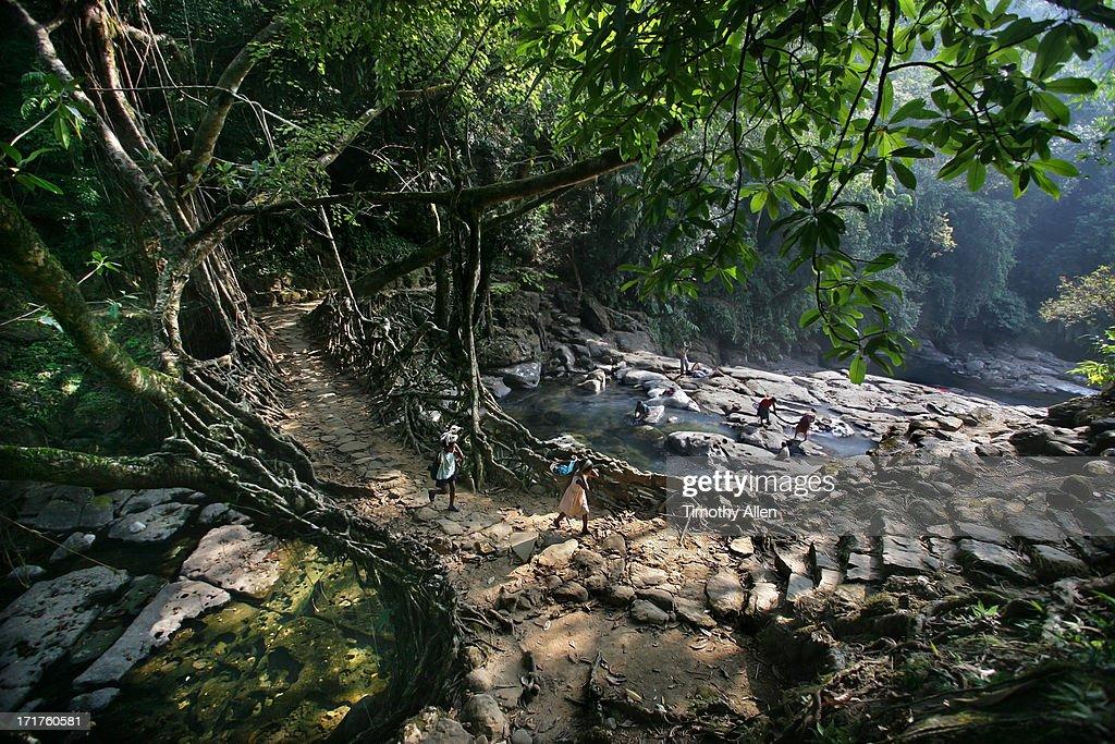 Khasi Living Root Bridge across a river : Stock Photo