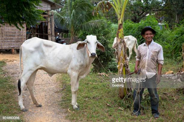 Khmer farmer with a cow Battambang Cambodia