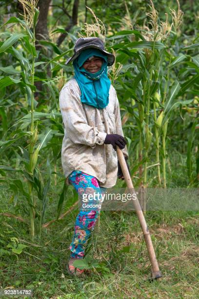 Khmer farmer working in a maize field Cambodia