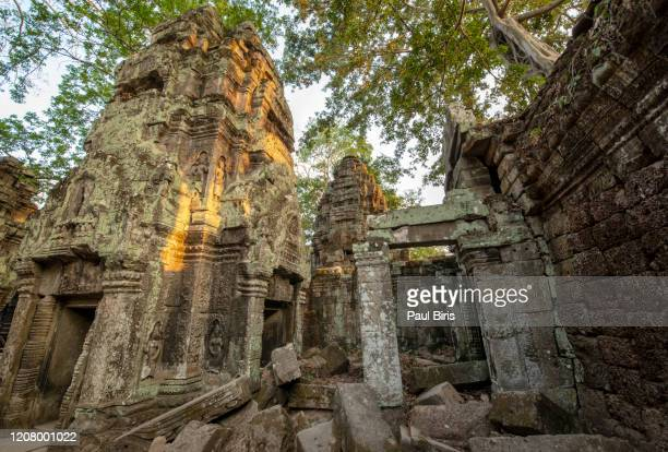 khmer temple of ta prohm in angkor wat - cambodia - シェムリアップ ストックフォトと画像